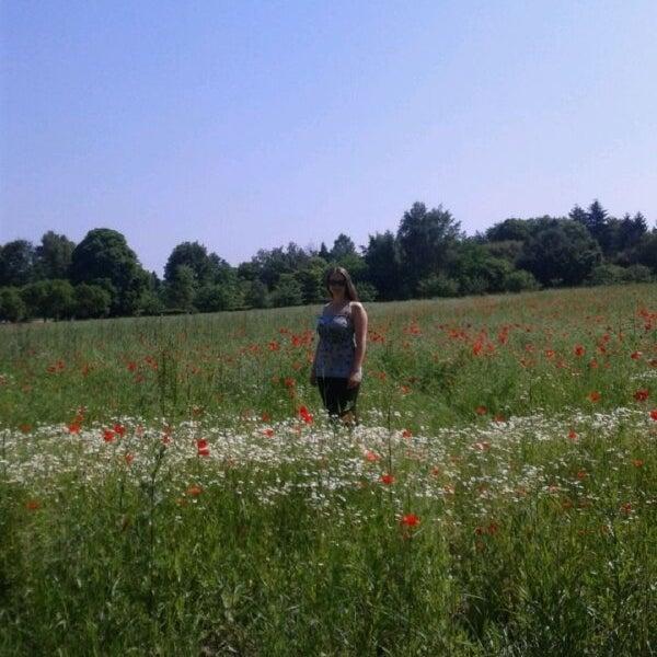 Bärlauch botanischer volkspark pankow Botanische Anlagen