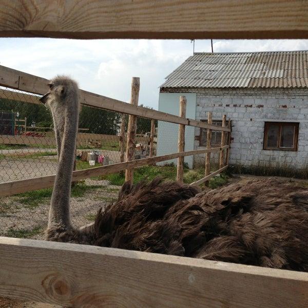 как построить страусиную ферму картинки фото лесосадах занимают