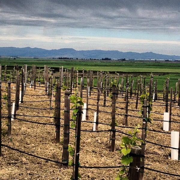 รูปภาพถ่ายที่ Ram's Gate Winery โดย Doug S. เมื่อ 3/30/2013