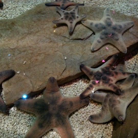 Foto diambil di SEA LIFE Minnesota Aquarium oleh Kelly L. pada 1/31/2013