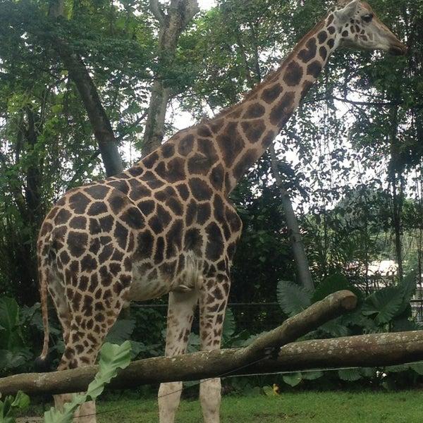 Foto tirada no(a) Singapore Zoo por Rain D. em 12/25/2012