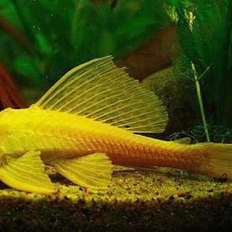 photos at the online aquarium shop 545 anzac ave