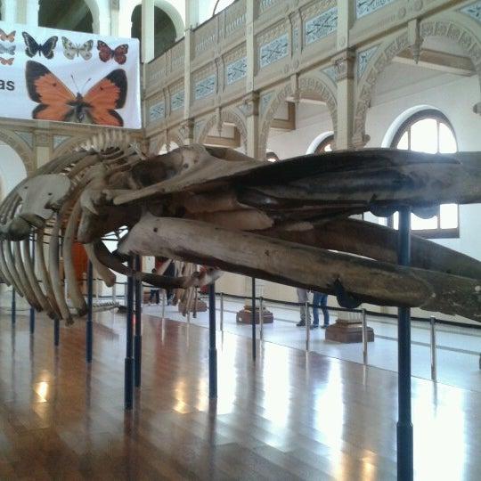 9/2/2012にRenato H.がMuseo Nacional de Historia Naturalで撮った写真