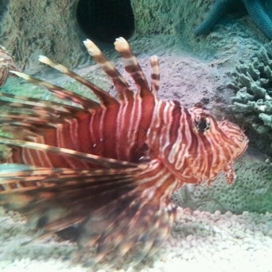 10/25/2012에 Aaron M.님이 SEA LIFE Minnesota Aquarium에서 찍은 사진