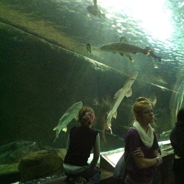 5/4/2013에 Cheryl R.님이 SEA LIFE Minnesota Aquarium에서 찍은 사진
