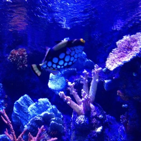 Das Foto wurde bei Antalya Aquarium von Murat T. am 7/25/2013 aufgenommen