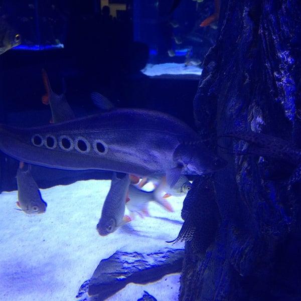 7/25/2013에 Murat T.님이 Antalya Aquarium에서 찍은 사진