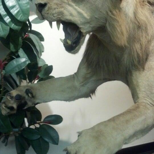 Foto tirada no(a) Las Vegas Natural History Museum por Jewels M. em 5/14/2013