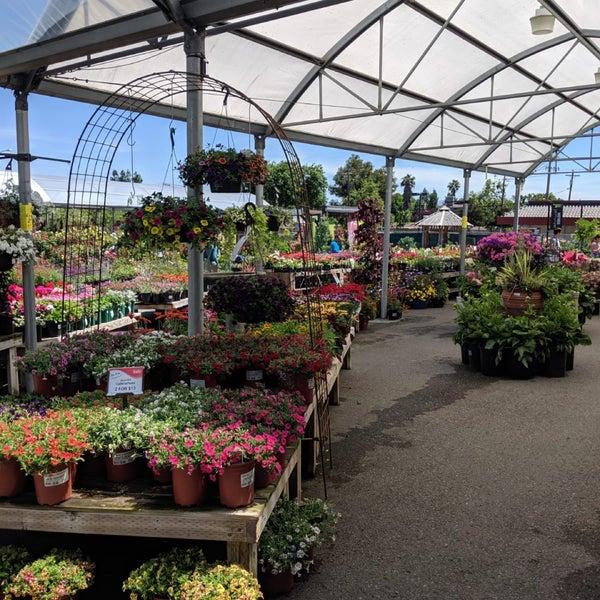 Photos At Summerwinds Nursery 3 Tips