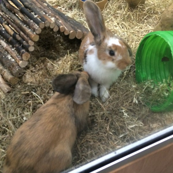 Photos At Pets At Home Pet Store In Bolton