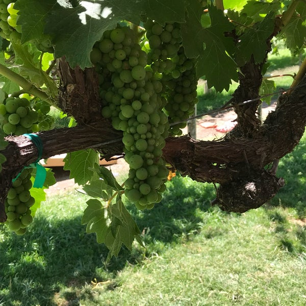 Das Foto wurde bei Kelsey See Canyon Vineyards von Barbara G. am 8/4/2018 aufgenommen