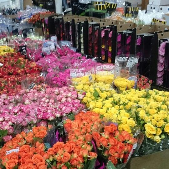 Магазинов, продажа цветов оптом в авиагородке
