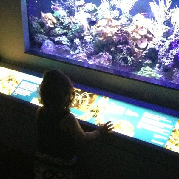 3/14/2013 tarihinde Michael C.ziyaretçi tarafından Texas State Aquarium'de çekilen fotoğraf