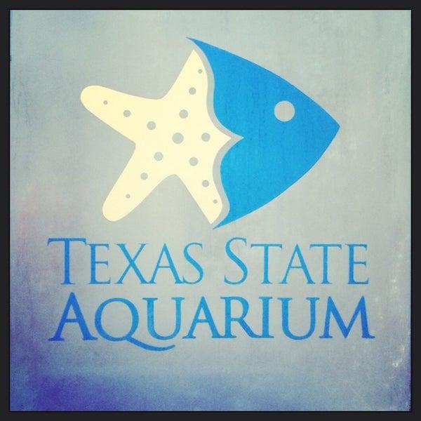 9/5/2013 tarihinde Georgette P.ziyaretçi tarafından Texas State Aquarium'de çekilen fotoğraf