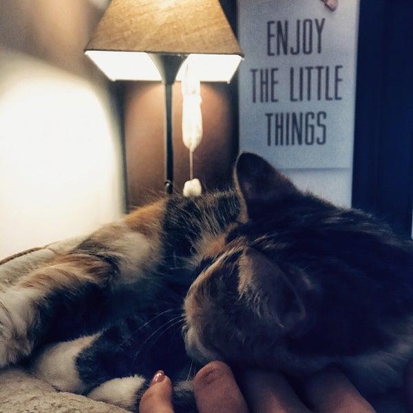 Portland mačička Fotografie obrovských penisy