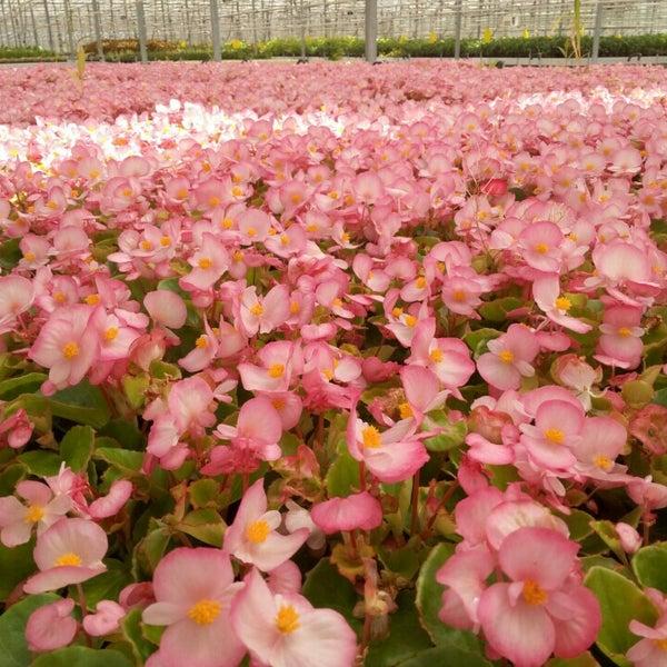 Цветы столицы цены минск