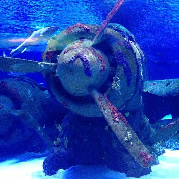 Das Foto wurde bei Antalya Aquarium von Cuneyt am 5/5/2013 aufgenommen