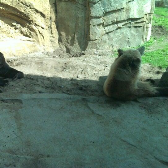 6/8/2013 tarihinde Scott D.ziyaretçi tarafından Minnesota Zoo'de çekilen fotoğraf