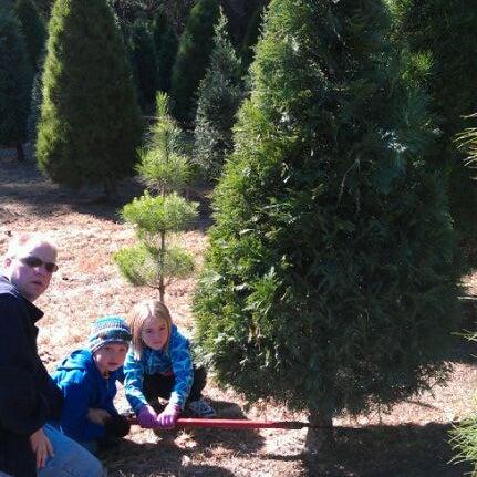 Photos At Paradise Christmas Tree Farm 11 Visitors