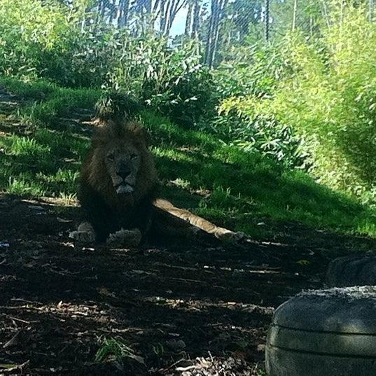 6/6/2011 tarihinde Sara R.ziyaretçi tarafından Auckland Zoo'de çekilen fotoğraf