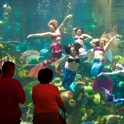 Don't miss the breathtaking spectacle at the aquarium, where gorgeous showgirls don mermaid regalia to frolic with eels, stingrays and sharks