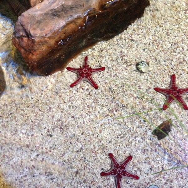 3/24/2013에 Debra S.님이 SEA LIFE Minnesota Aquarium에서 찍은 사진
