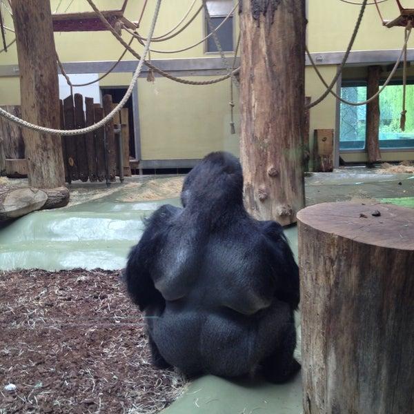 5/3/2013에 Helen L.님이 Zoologischer Garten Berlin에서 찍은 사진