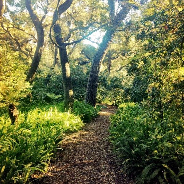 11/4/2014 tarihinde Jerome G.ziyaretçi tarafından Descanso Gardens'de çekilen fotoğraf