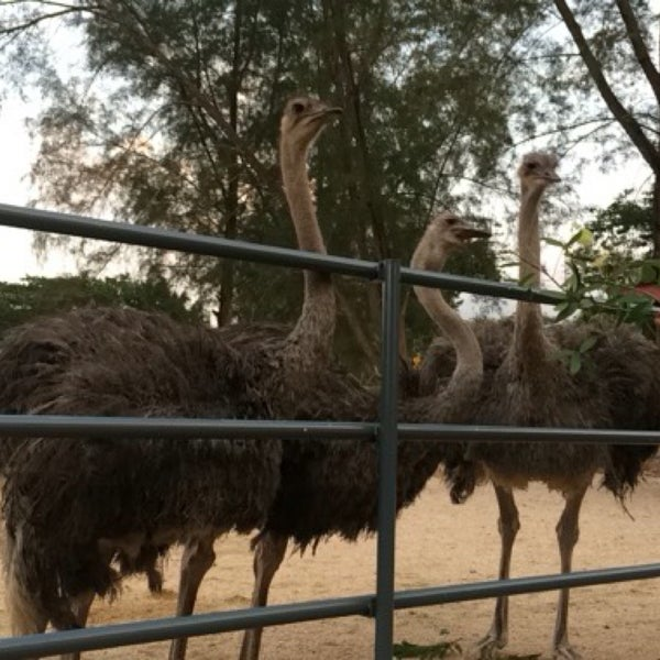 Taman Burung Unta Uum Park
