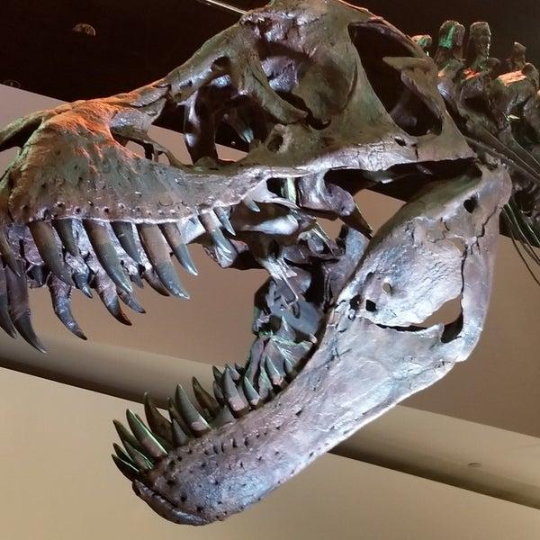 Foto scattata a Houston Museum of Natural Science da Sam O. il 6/27/2019