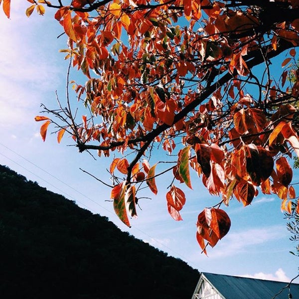 Das Foto wurde bei Kelsey See Canyon Vineyards von Michelle M. am 10/14/2018 aufgenommen