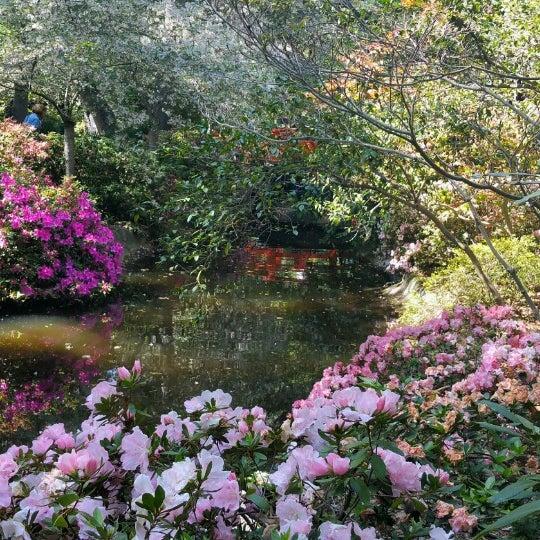 3/29/2015 tarihinde Bonny P.ziyaretçi tarafından Descanso Gardens'de çekilen fotoğraf