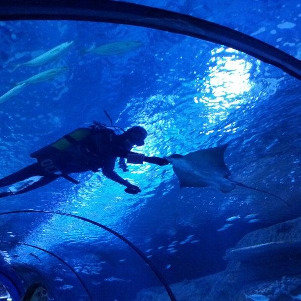 Das Foto wurde bei Antalya Aquarium von Ömer K. am 8/10/2013 aufgenommen