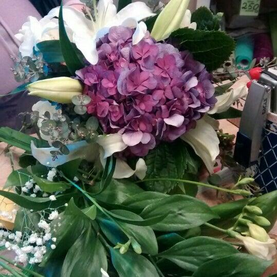 Цветов, доритис цветы подарки