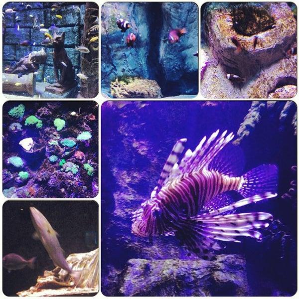 Das Foto wurde bei Antalya Aquarium von Алика am 7/13/2013 aufgenommen