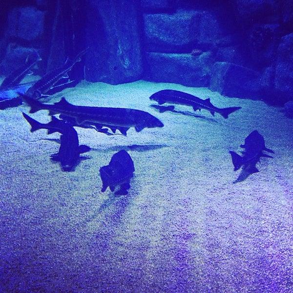 7/13/2013에 Алика님이 Antalya Aquarium에서 찍은 사진