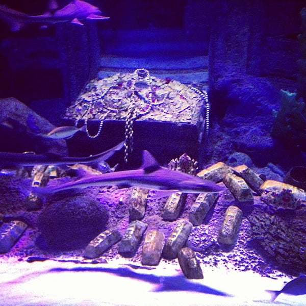 7/13/2013にАликаがAntalya Aquariumで撮った写真