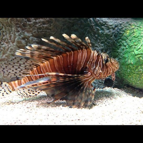 10/20/2012에 Rebecca T.님이 SEA LIFE Minnesota Aquarium에서 찍은 사진