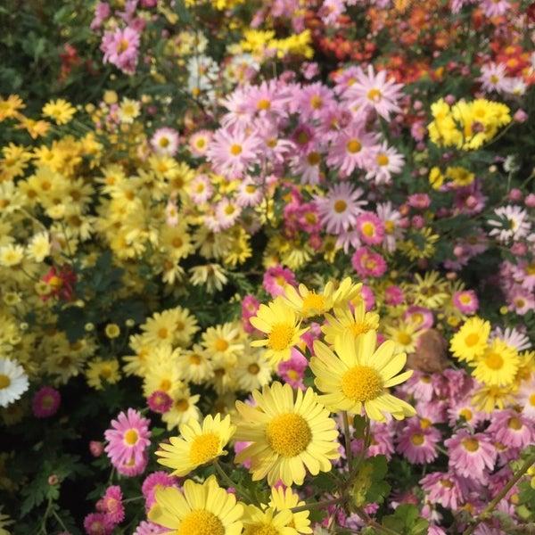 Foto scattata a Conservatory Garden da Mami S. il 10/28/2014