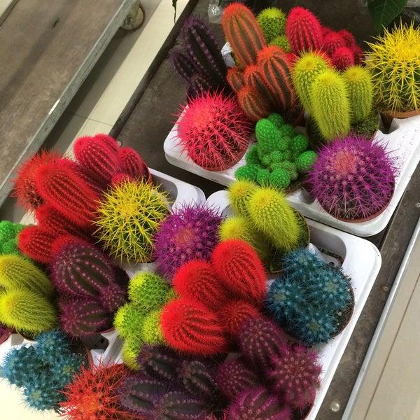 Оптовая продажи цветов в серпухове