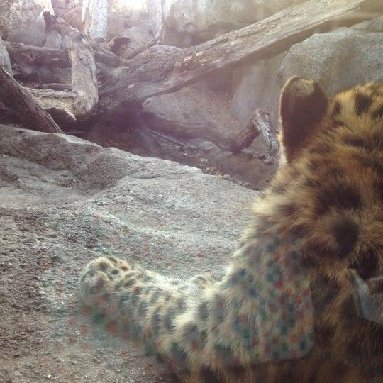 10/21/2012 tarihinde Chuck O.ziyaretçi tarafından Minnesota Zoo'de çekilen fotoğraf