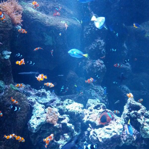 Das Foto wurde bei Aquarium of the Pacific von Caprice P. am 7/7/2013 aufgenommen