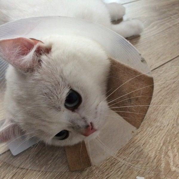 Photos at Pet Dünyası Veteriner Kliniği - Ambarlı - İstanbul
