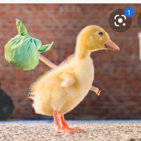 Photo prise au Odd Duck par Eizabeth R. le7/18/2020