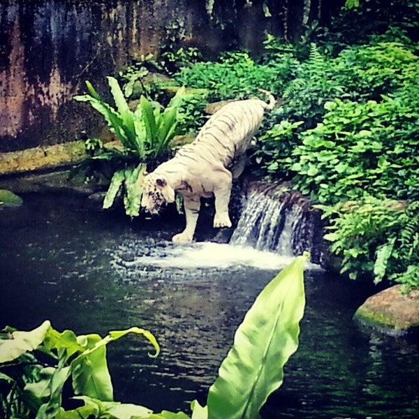 Foto tirada no(a) Singapore Zoo por Jesslyn P. em 1/11/2013