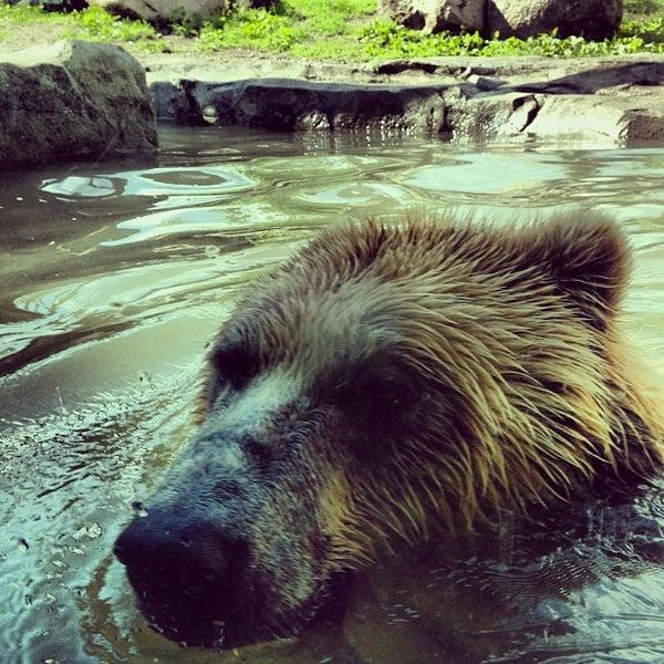 6/15/2013 tarihinde Sam D.ziyaretçi tarafından Minnesota Zoo'de çekilen fotoğraf