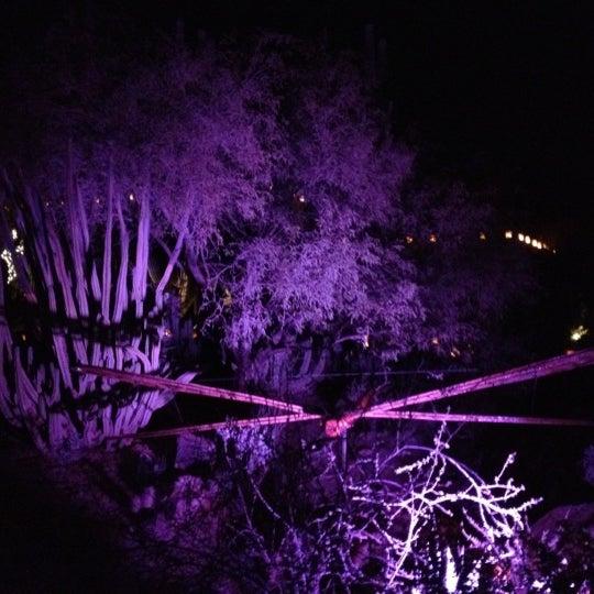 Foto tirada no(a) Desert Botanical Garden por Dave B. em 12/27/2011