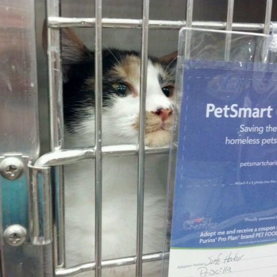 Photos at PetSmart - Pet Store