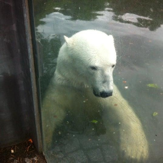 6/6/2012에 Yıldıray K.님이 Zoologischer Garten Berlin에서 찍은 사진