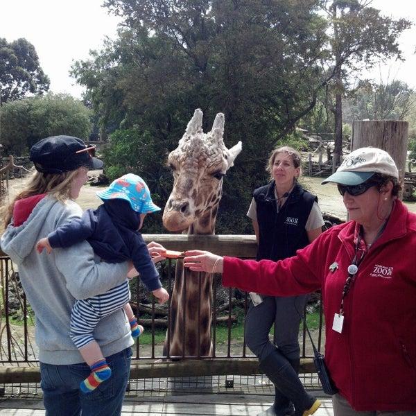 9/26/2013 tarihinde Michaelziyaretçi tarafından Auckland Zoo'de çekilen fotoğraf